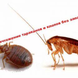 Уничтожение тараканов и клопов без запаха