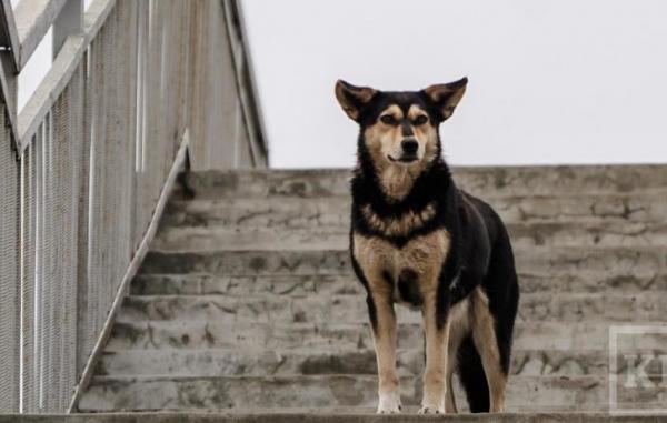 Семью задержали за отлов собак для ресторанов Москвы