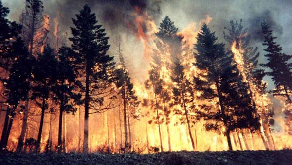 объявлен пожароопасный сезон