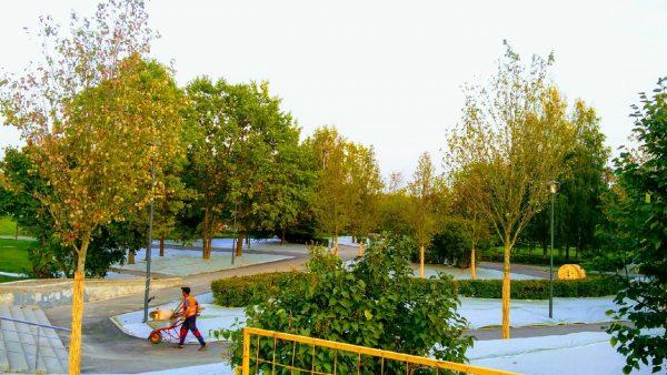 Благоустройство Парка Победы в городе Зеленограде приживается газонная трава