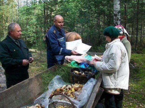 Поход за ягодами для россиянина обернулся штрафом