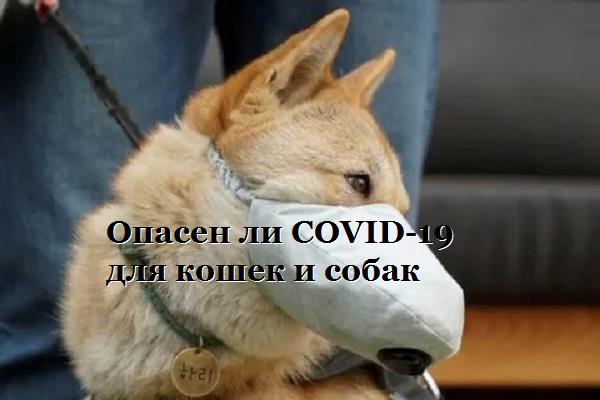 Опасен ли COVID-19 для кошек и собак