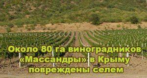 okolo-80-ga-vinogradnikov-massandry-v-kry-mu-povrezhdeny-selem