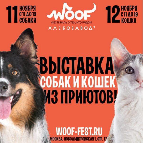 zelenogradskij-blagotvoritel-ny-j-fond-pomoshhi-bezdomny-m-zhivotny-m-nika-provedet-masshtabny-j-festival-woof