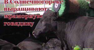 v-solnechnogorske-vy-rashhivayut-mramornuyu-govyadinu