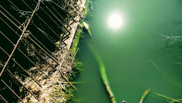 в озере Чёрное погибла вся рыба