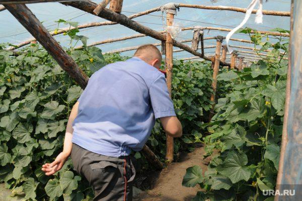 огородники сносят теплицы